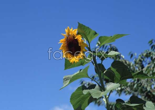 Flowers close-up 1080