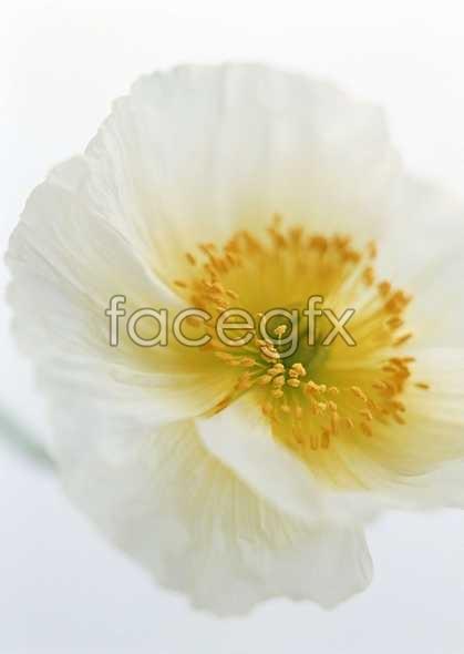 Flowers close-up 1415