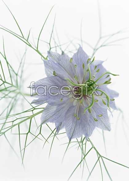 Flowers close-up 1468