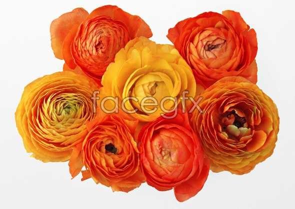 Flowers close-up 412