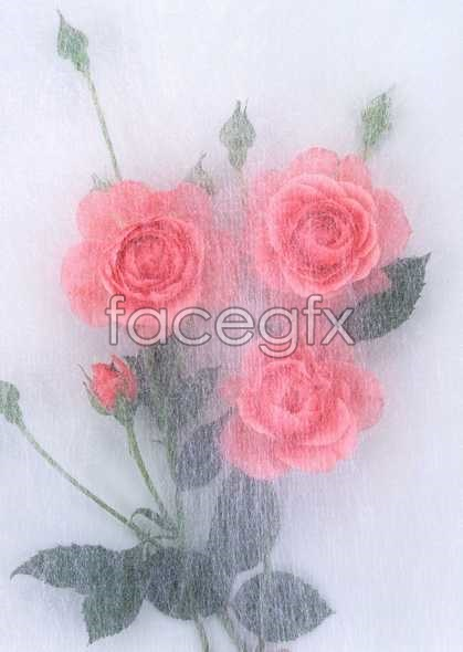 Flowers close-up 901