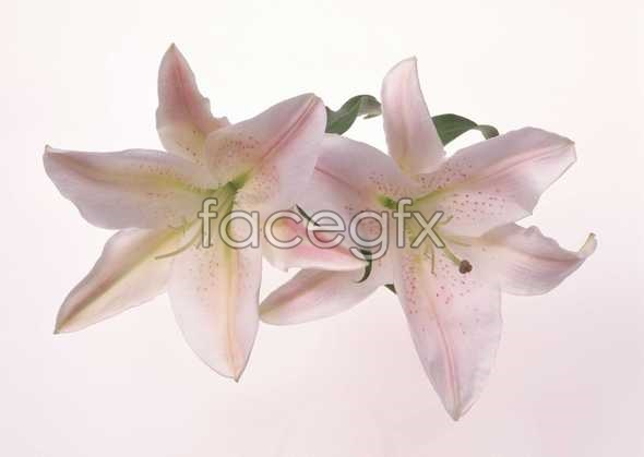 Flowers close-up 959
