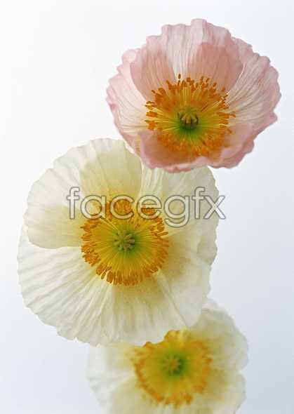 Flowers close-ups 1419