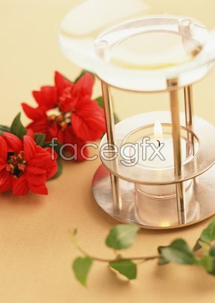 Indoor flower 195