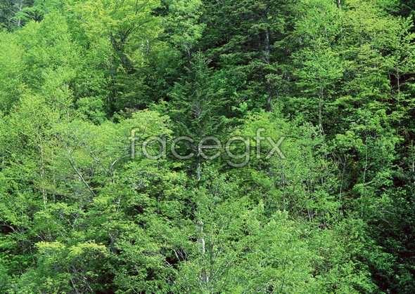 Jungle beauty of 479