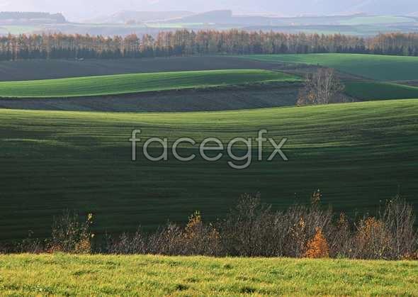 Rural pastoral 65