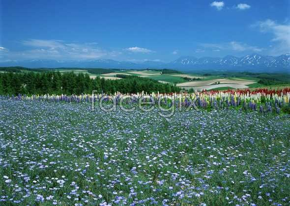 Thousands of flowers 567