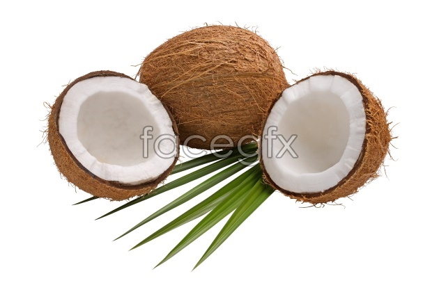 Coconut pictures HD
