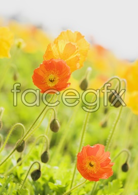 Flowers and pictures of 2,144