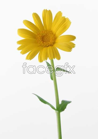 Flowers close-up 524