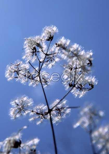 Flowers close-up 695