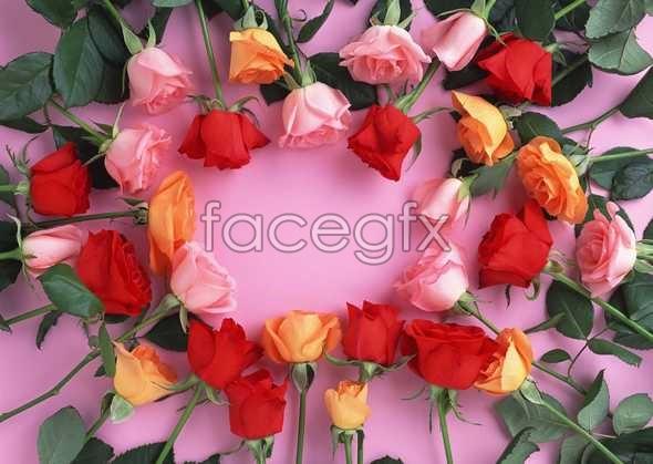 Flowers close-up 975