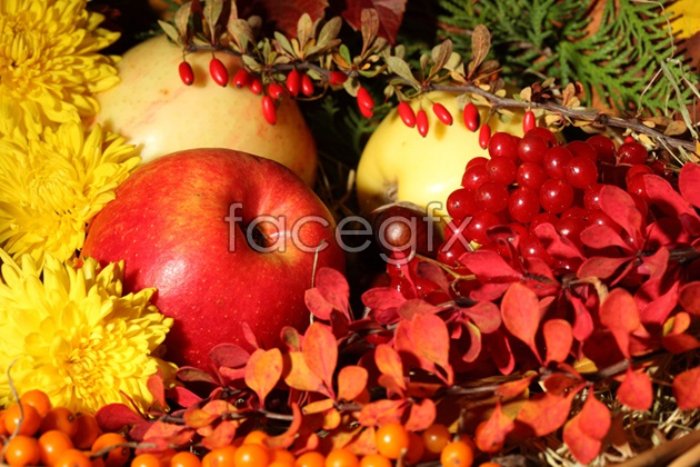 HD flowers fruit pictures