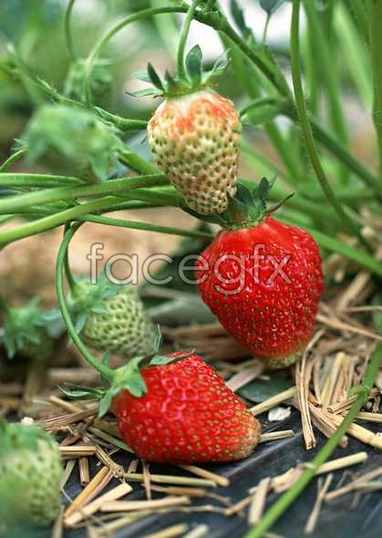 HD fruit pictures