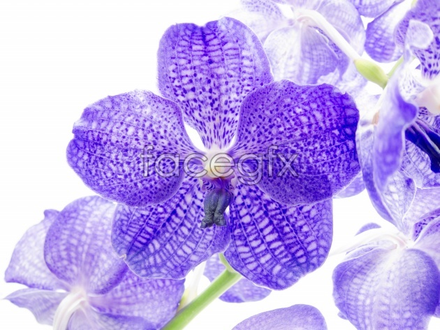 HD-purple flowers in the background picture
