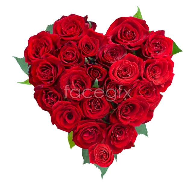 Heart-shaped rose pho