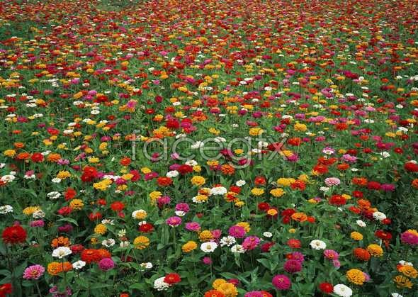 Thousands of flowers and 586