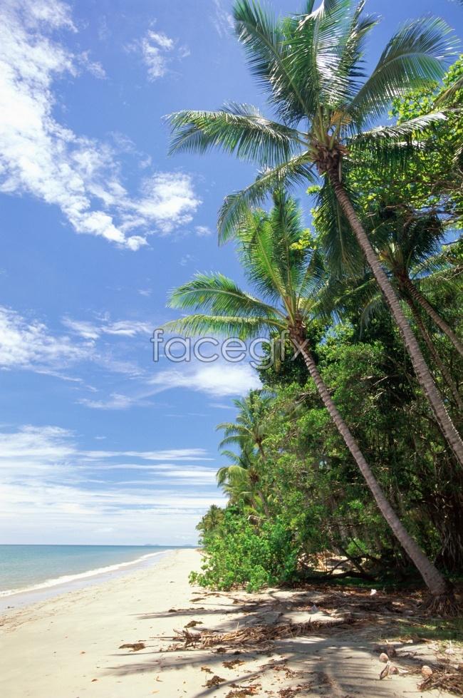 Beach coconut trees scenery picture