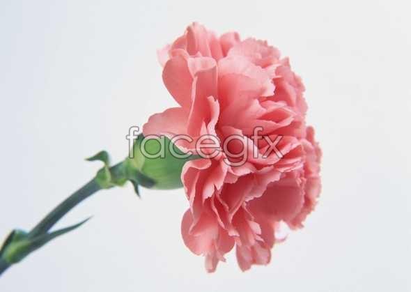 Flowers close-up 114