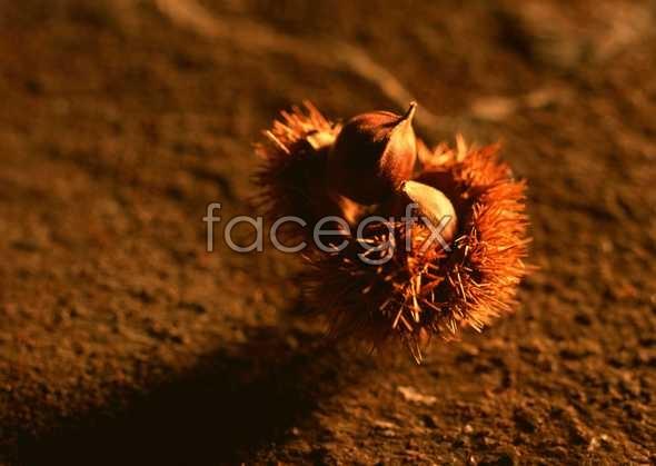 Flowers close-up 1157