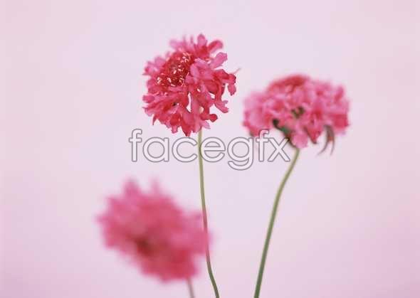 Flowers close-up 1729