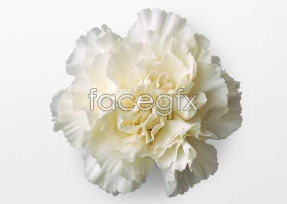 Flowers close-up 437