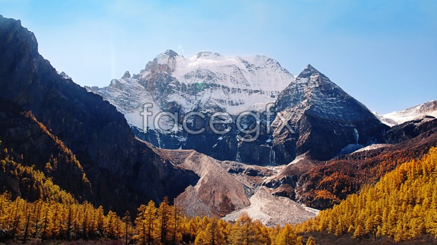 Forest landscape material picture
