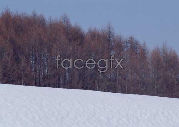 Ice 459