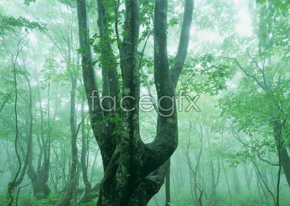 Jungle beauty of 134