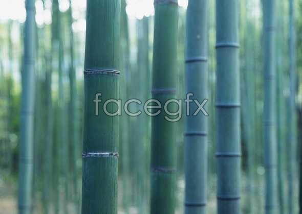 Jungle beauty of 303