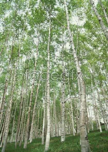 Jungle beauty of 524