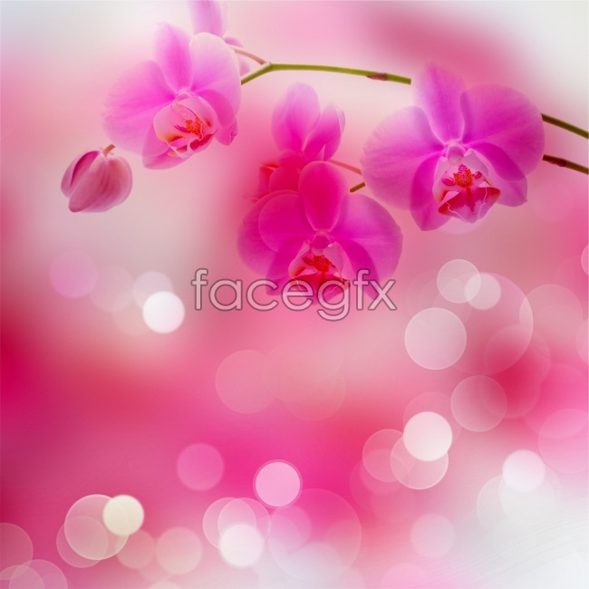 Pink Orchid background high definition pictures