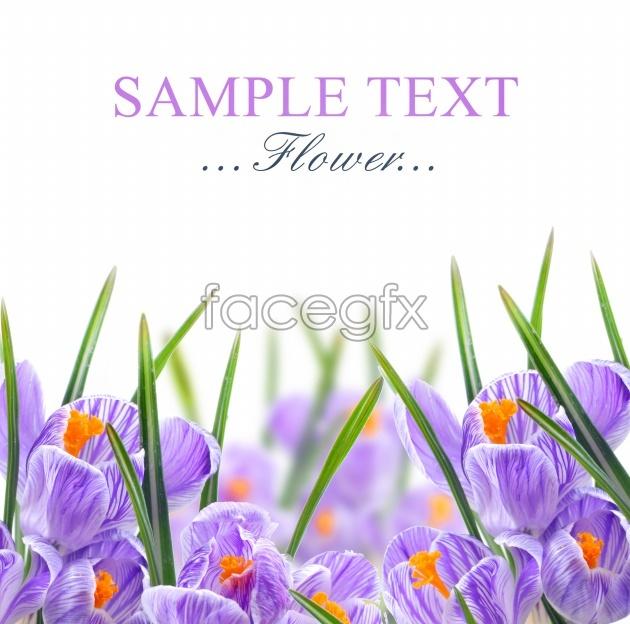 Purple flower card HD picture