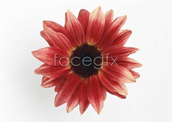 Flowers close-up 1378