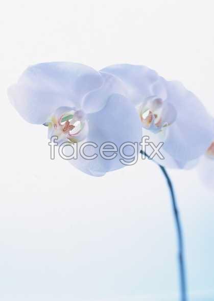 Flowers close-up 1648