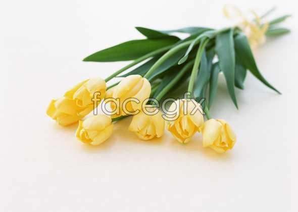 Flowers close-up 1743