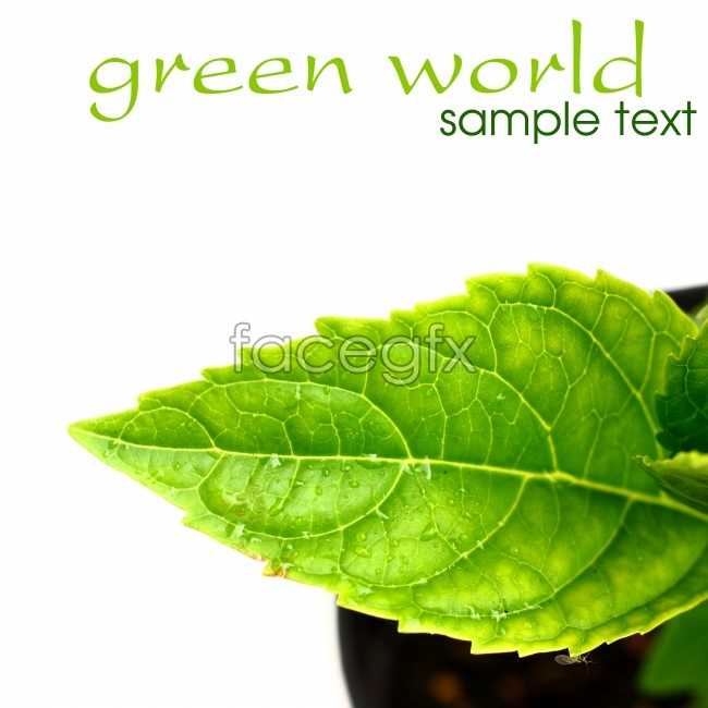 HD green leaf plants pictures