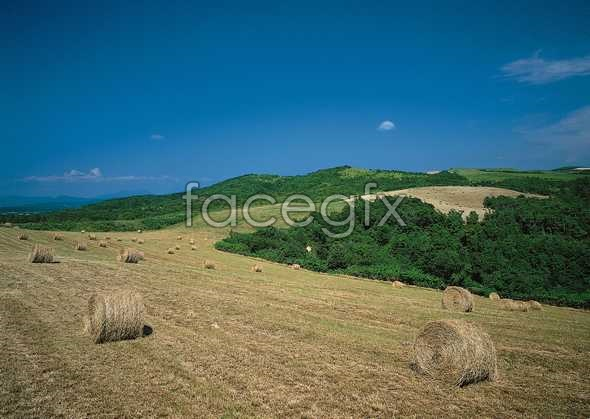 Idyllic rural 21