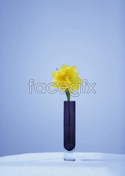 Indoor flower 82