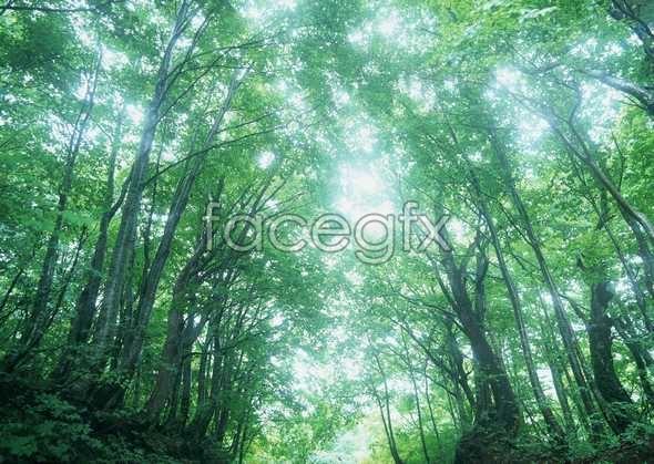 Jungle beauty of 131