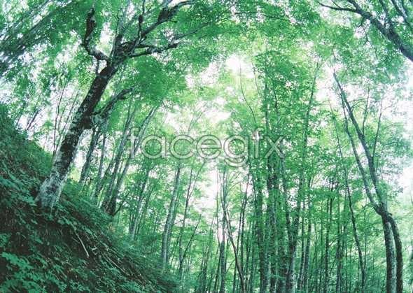 Jungle beauty of 94