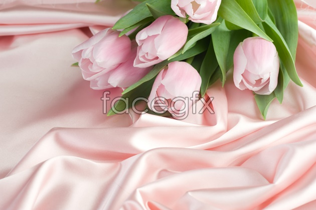 Pink rose pictures HD