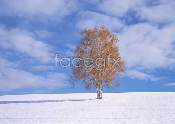 Snow 201