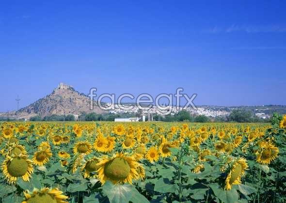 Thousand flower 308