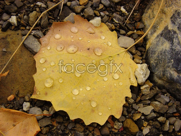 Dew leaf material picture