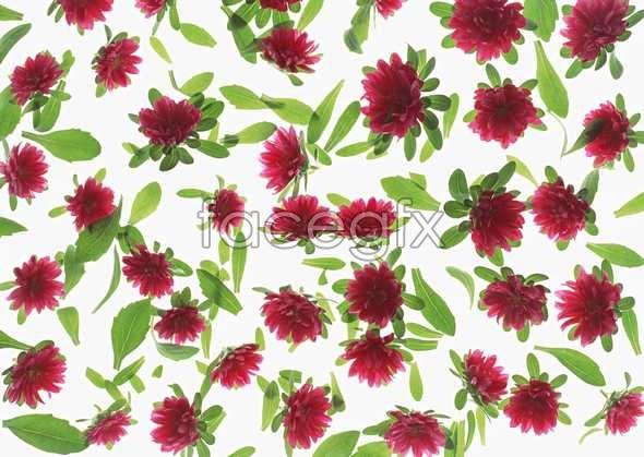 Flowers close-up 1041