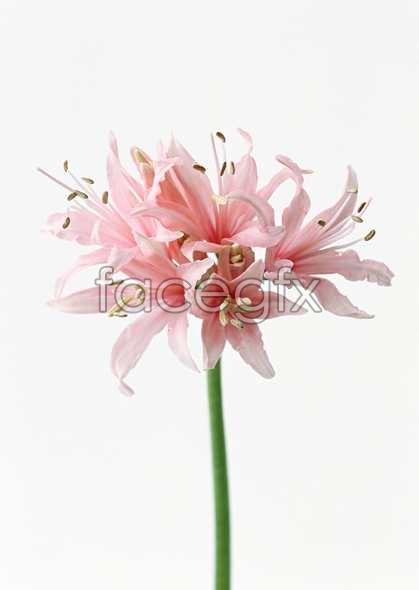 Flowers close-up 1462