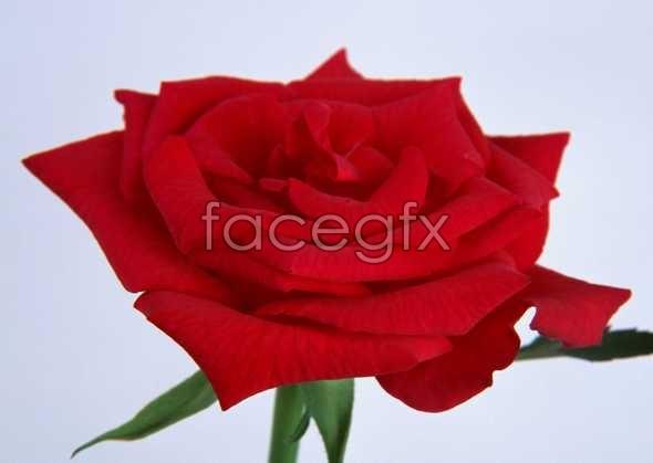 Flowers close-up 34