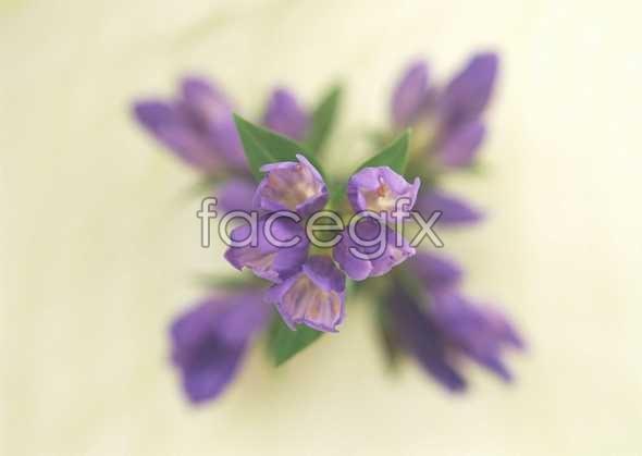 Flowers close-up 904