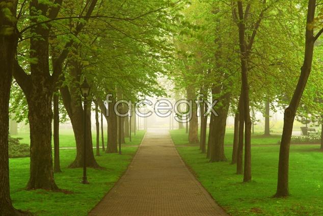 Forest Lawn landscape picture